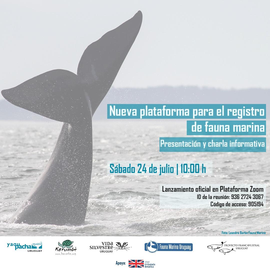 Avistamiento de cetáceos en costas canarias