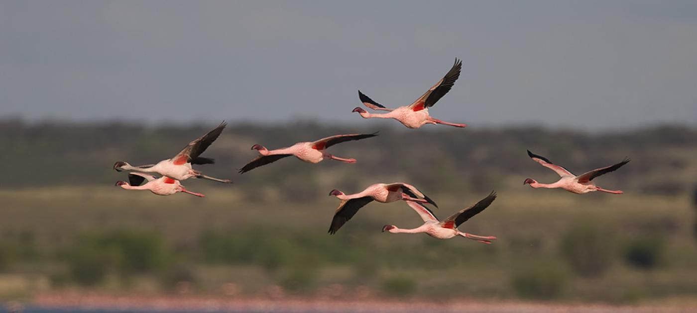 Aves que migran miles de kilómetros para llegar a nuestro país buscan ser protegidas por proyecto
